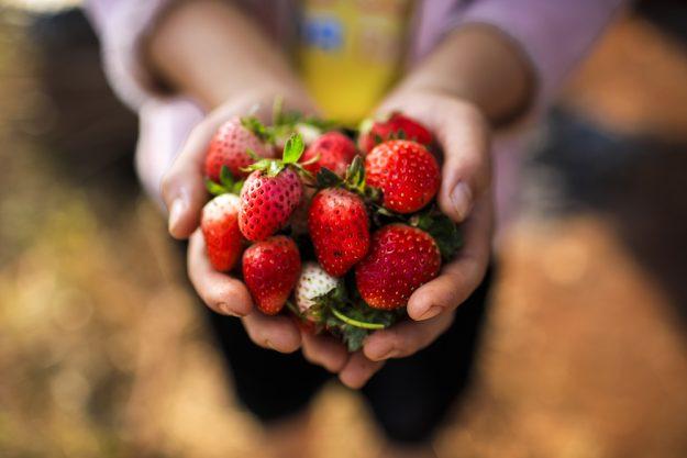 Betriebsausflug Wien - Frische Erdbeeren