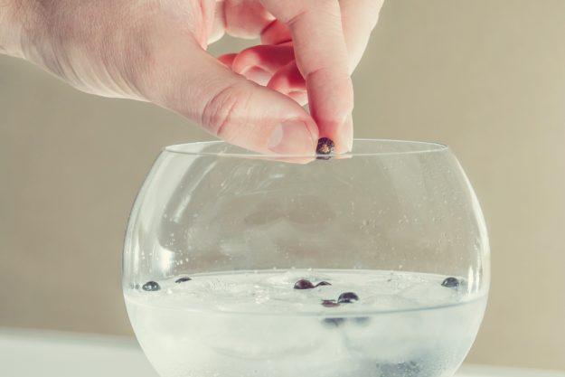 Gin-Tasting Wien –Wacholderbeeren im Gin Tonic