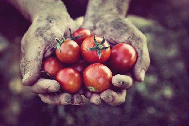 Veggie-Kochkurs-Gutschein –Selbst angebaute Tomaten